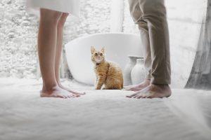 kat tussen ruziend echtpaar