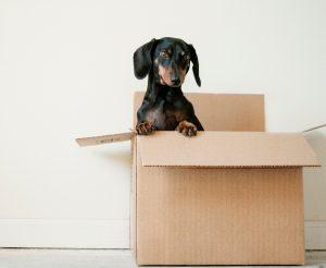 hondje-in-verhuisdoos